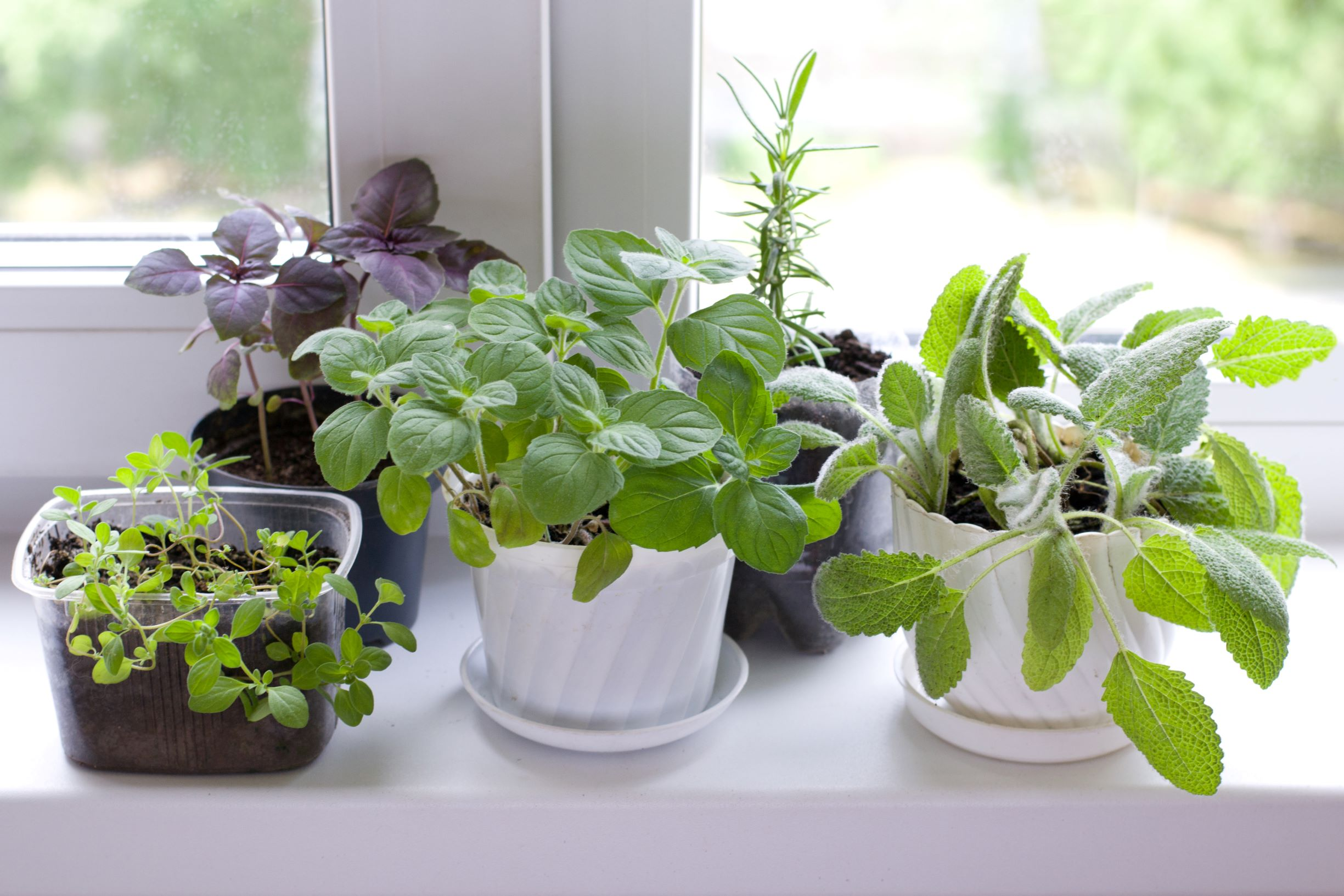 An indoor herb garden can beautify your kitchen, freshen up your home, and enhance your cooking.
